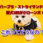 バーブラ・ストライサンドの愛犬の名前とクローン犬の金額は?